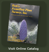 Rich's Foxwillow Pines Catalog